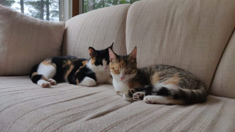 Haliburton, Cottage, Rental, Stormy, Lake, Fall, Bunkie, Pets, Cats, Dogs, Chien, chat, Animaux Acceptés